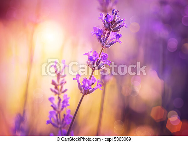 Flowers. Floral Abstract Purple Design. Soft Focus - csp15363069