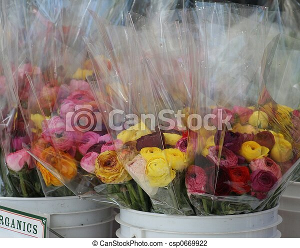 Flowers for Sale - csp0669922