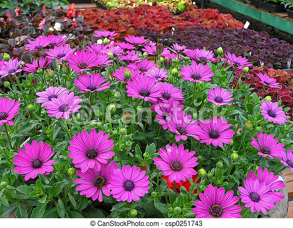 Flowers For Sale Greenhouse Bench Full Of Spring Bedding Plants