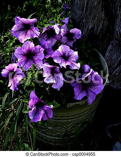flowers in a bucket - csp0004955