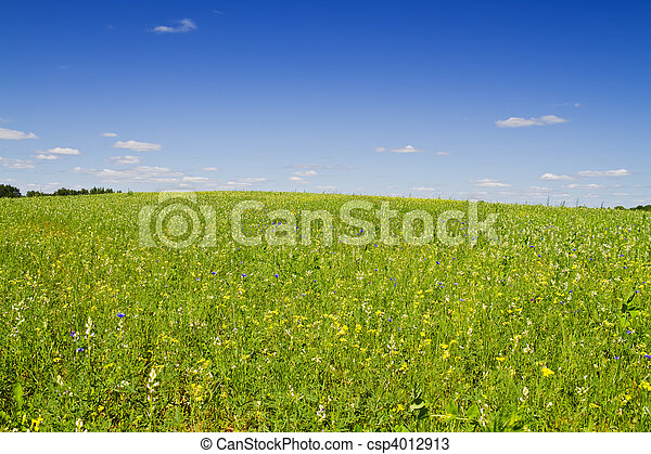 flowers in a meadow - csp4012913