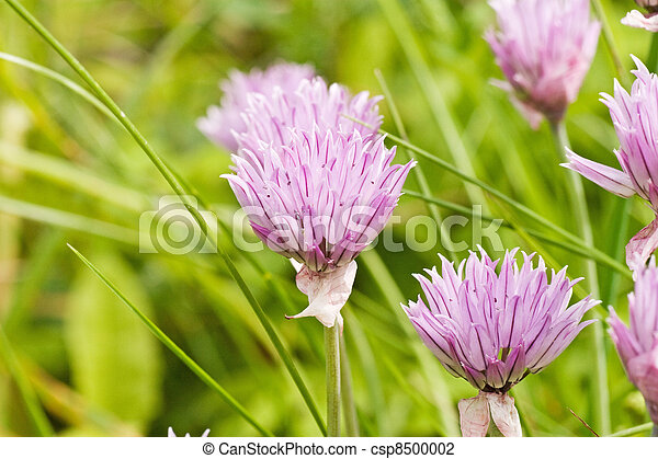 flowers in a summer meadow - csp8500002