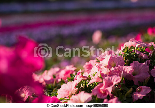 flowers in a sunny day - csp46895898