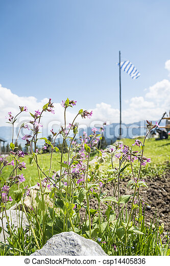 Flowers in alps - csp14405836