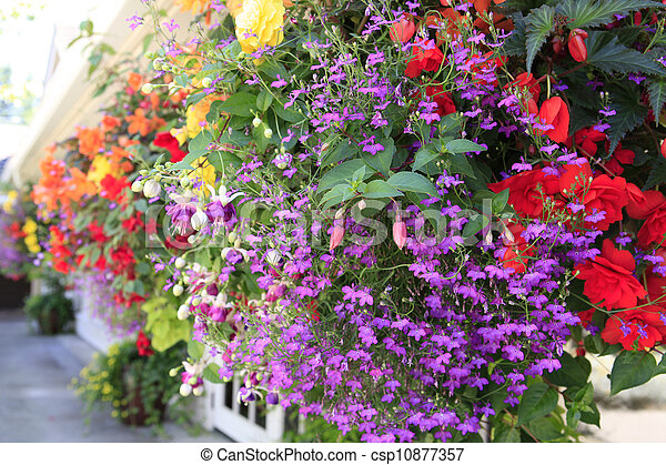Flowers in hanging basket with white window and brown wall. - csp10877357