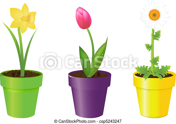 Flowers In Pots  sc 1 st  Can Stock Photo & 3 flowers in pots tulip narcissus and camomile isolated on white ...
