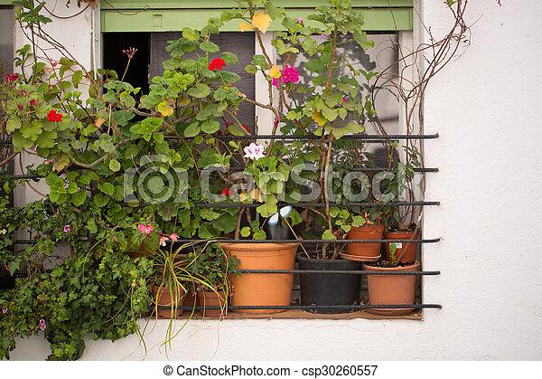 Flowers in pots on the window - csp30260557