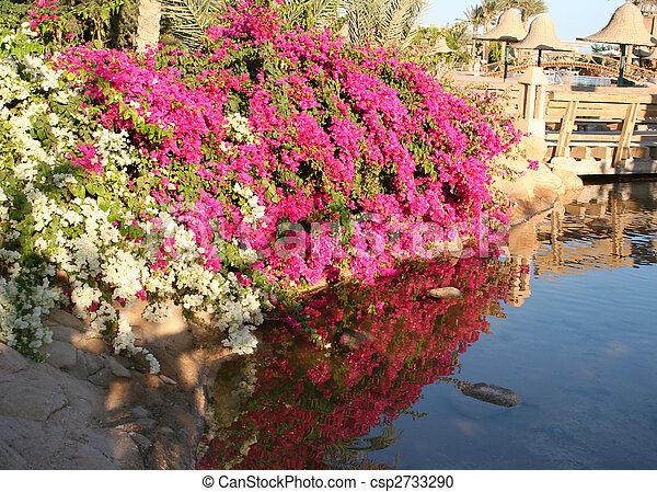 Flowers in Resort Sharm-Al-Sheikh  - csp2733290