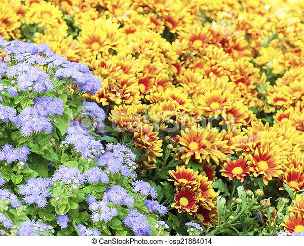 Flowers in the garden - csp21884014