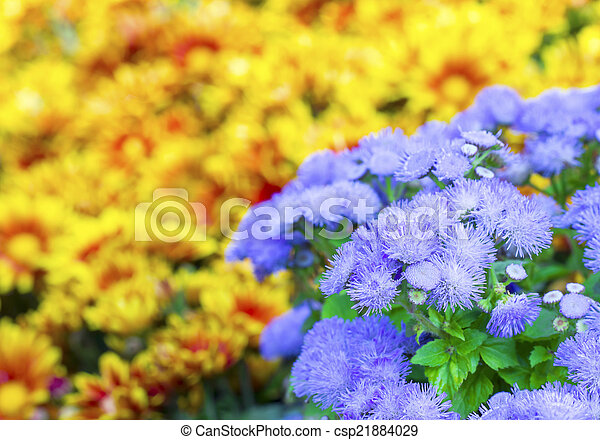 Flowers in the garden - csp21884029