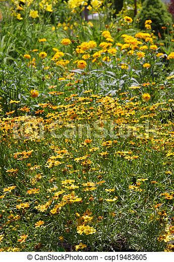 Flowers in the garden - csp19483605