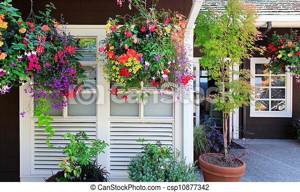 Flowers in the hanging baskets with white windows and brown wall. - csp10877342