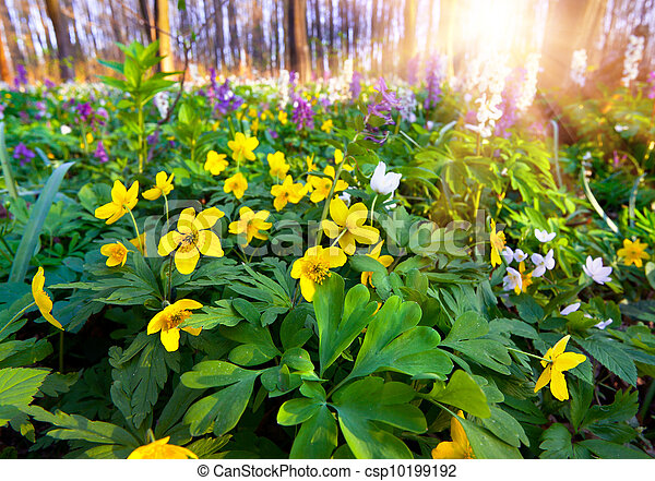 Flowers in the spring forest - csp10199192