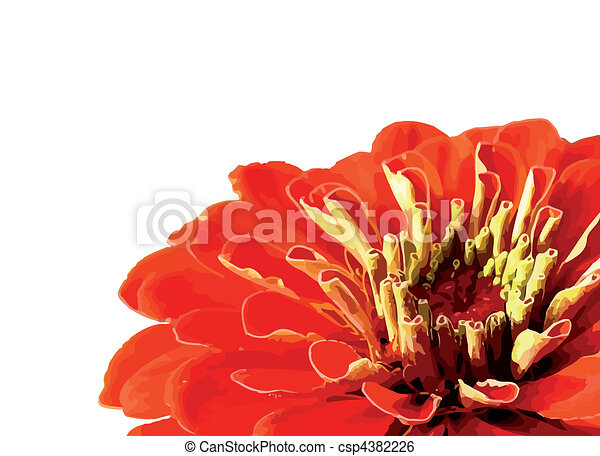 Flowers isolated on white background - csp4382226