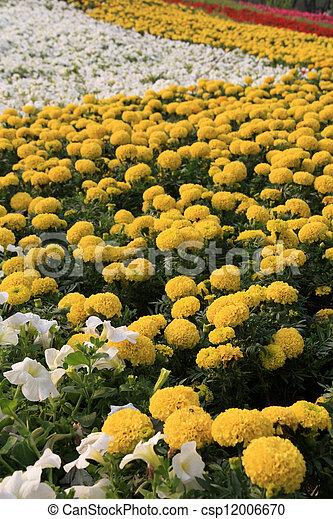 flowers landscape in a park - csp12006670