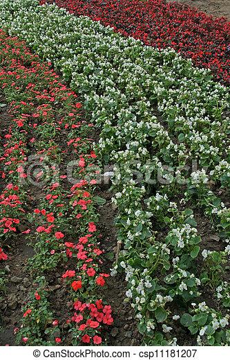flowers landscape in a park - csp11181207