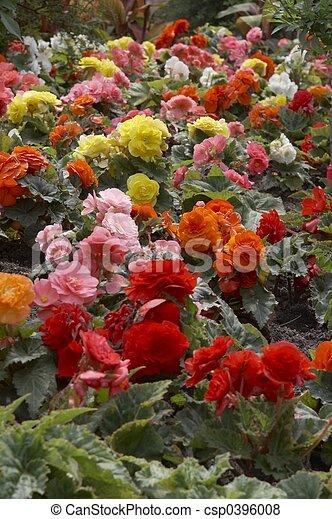 flowers - landscape - csp0396008