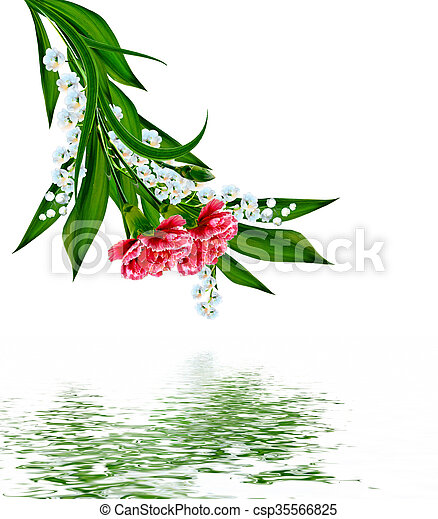 flowers lily of the valley - csp35566825