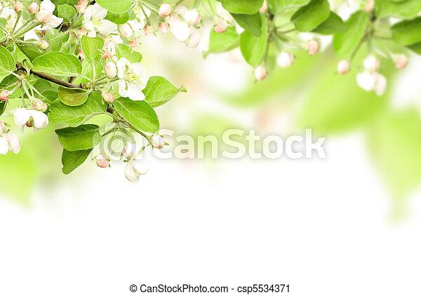 Flowers of apple - csp5534371
