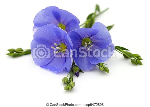 Flowers of flax - csp6472898