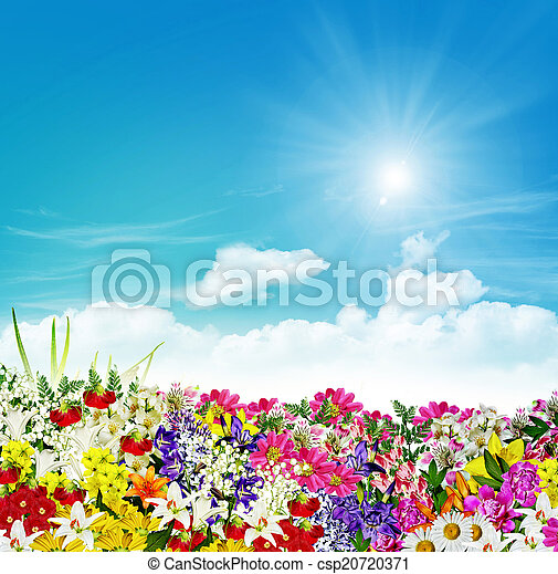 flowers on a background of blue sky with clouds - csp20720371