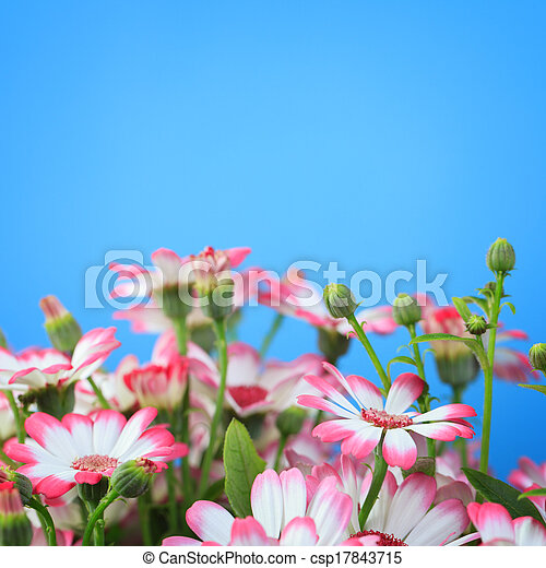 Flowers on a blue background - csp17843715