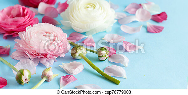 Flowers on a light blue background - csp76779003