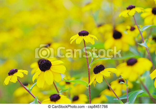 flowers on field - csp8451766