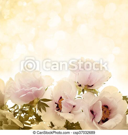 flowers peonies - csp37032689