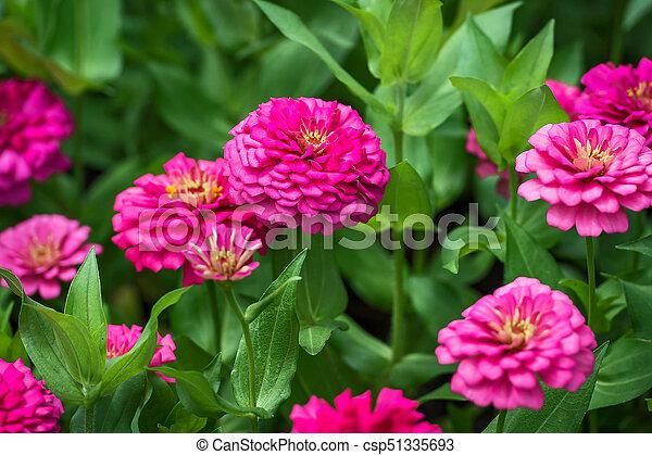 flowers. - csp51335693