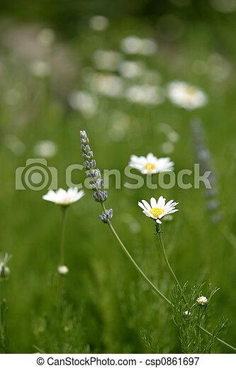 Flowers - csp0861697