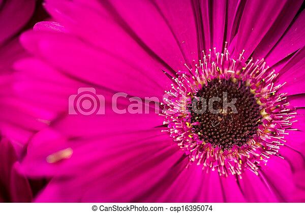 Flowers - csp16395074
