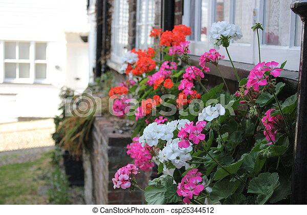 Flowers - csp25344512