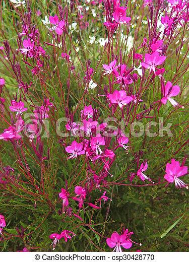 flowers - csp30428770