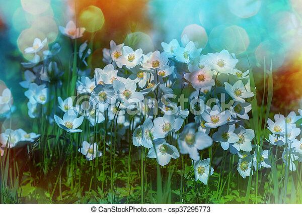 Flowers - csp37295773