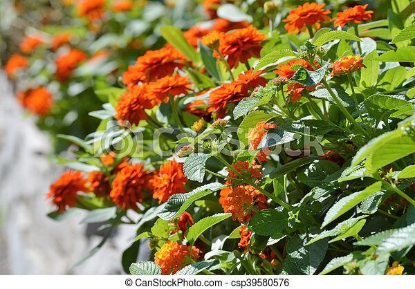 Flowers - csp39580576