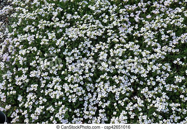 Flowers - csp42651016