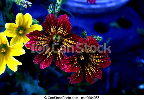 flowers - csp0004958