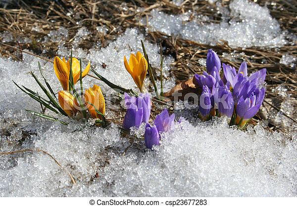flowers - csp23677283