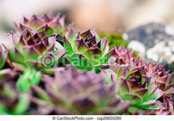 flowers - csp28650280