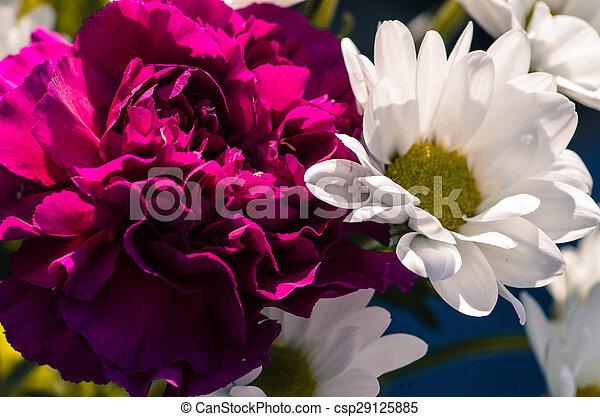 flowers - csp29125885