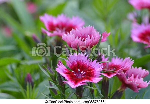 flowers - csp38576088