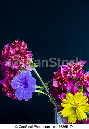 Flowers red purple yellow black background flowers red purple yellow black background csp46865174 mightylinksfo
