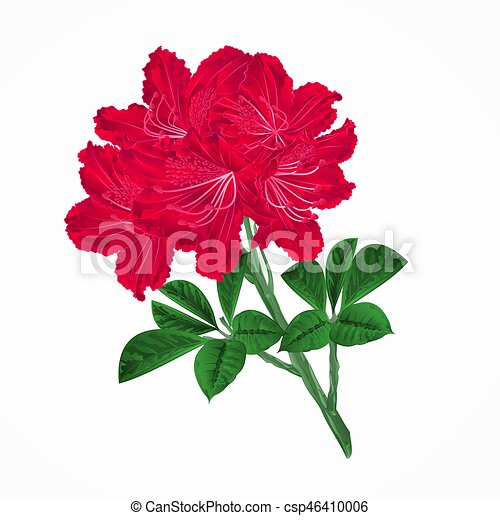 flowers red rhododendrons twig vintage vector eps flowers vector rh canstockphoto ie vintage flower vector free download vintage flower vector black white