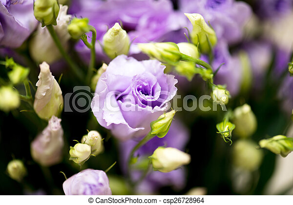 flowers - csp26728964