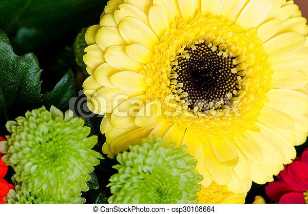 flowers - csp30108664