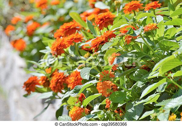 Flowers - csp39580366