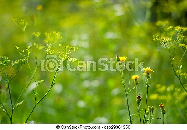 flowers - csp29364350