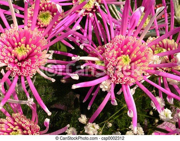 Flowers - csp0002312