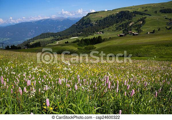 Flowers - csp24600322